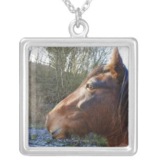 Portrait of brown horse on cold day staring into silver plated necklace