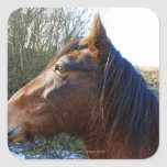 Portrait of brown horse on cold day staring into square stickers