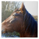 Portrait of brown horse on cold day staring into tiles