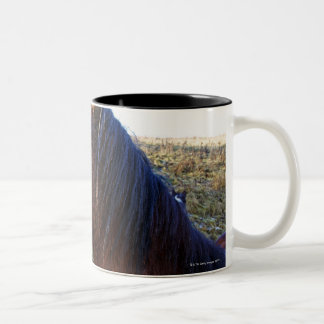 Portrait of brown horse on cold day Two-Tone coffee mug