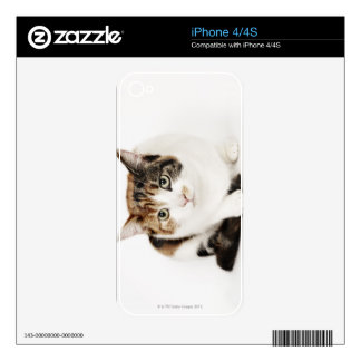 Portrait of Calico cat Decal For The iPhone 4