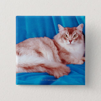 Portrait of cat 3 pinback button