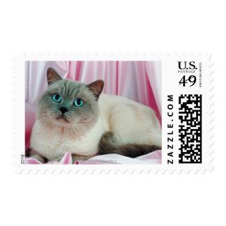 Portrait of cat 4 postage