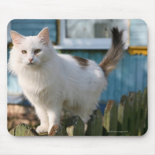 Portrait of cat on fence mouse pad