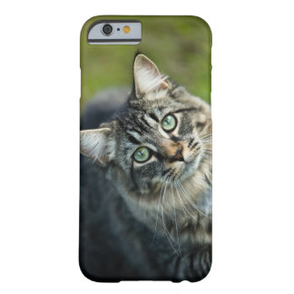 Portrait of cat outdoors barely there iPhone 6 case