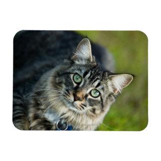 Portrait of cat outdoors magnet