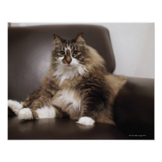 Portrait Of Cat Sitting In Chair Poster