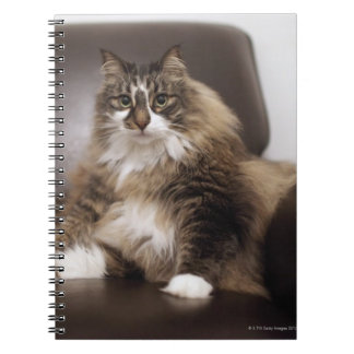 Portrait Of Cat Sitting In Chair Spiral Notebooks