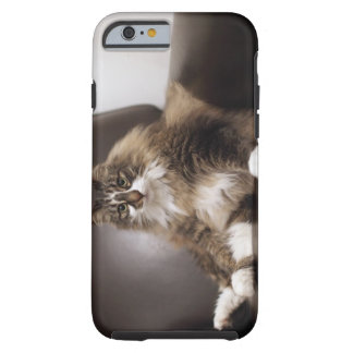 Portrait Of Cat Sitting In Chair Tough iPhone 6 Case