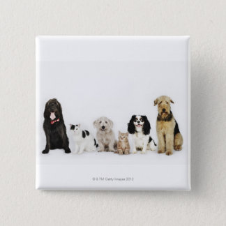 Portrait of cats and dogs sitting together button