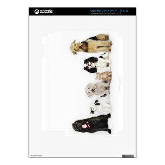 Portrait of cats and dogs sitting together iPad 3 skins