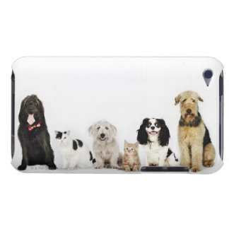 Portrait of cats and dogs sitting together iPod Case-Mate case