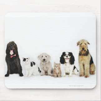 Portrait of cats and dogs sitting together mouse pad