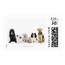 Portrait of cats and dogs sitting together postage