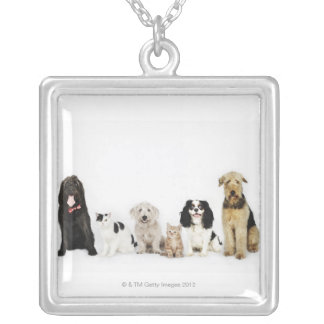 Portrait of cats and dogs sitting together silver plated necklace