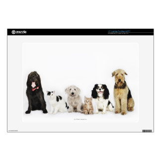 Portrait of cats and dogs sitting together laptop skin