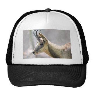 Portrait of chamois trucker hat