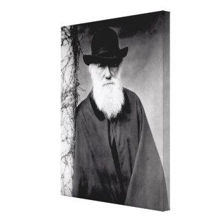 Portrait of Charles Darwin  1881 Canvas Prints