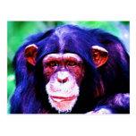 Portrait of Chimpanzee Postcard