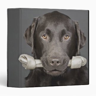 Portrait of chocolate labrador binder