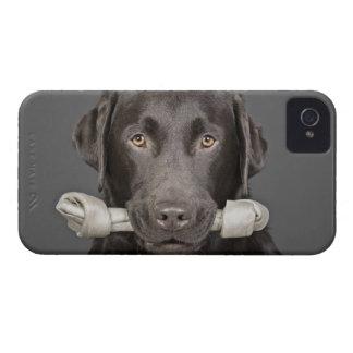 Portrait of chocolate labrador Case-Mate iPhone 4 case