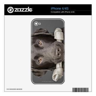 Portrait of chocolate labrador iPhone 4 decal