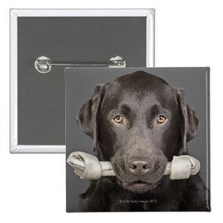 Portrait of chocolate labrador pinback button