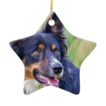 Portrait of Colored border collie dog.JPG Ceramic Ornament