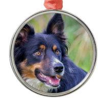 Portrait of Colored border collie dog.JPG Metal Ornament