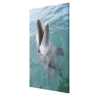Portrait of Common Bottlenose Dolphin, Caribbean Canvas Print