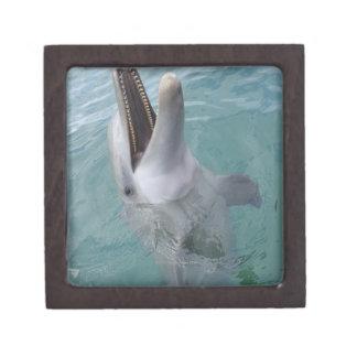 Portrait of Common Bottlenose Dolphin, Caribbean Jewelry Box