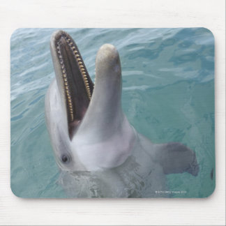 Portrait of Common Bottlenose Dolphin, Caribbean Mouse Pad
