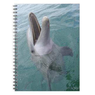 Portrait of Common Bottlenose Dolphin, Caribbean Notebook