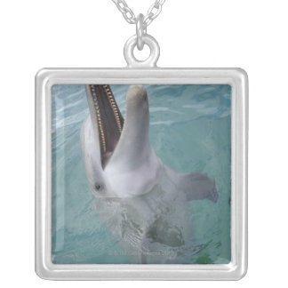 Portrait of Common Bottlenose Dolphin, Caribbean Silver Plated Necklace