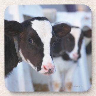 Portrait of cow beverage coaster