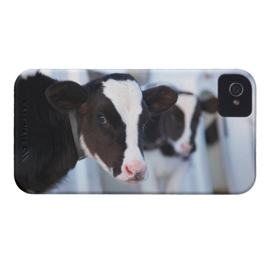 Portrait of cow iPhone 4 cover