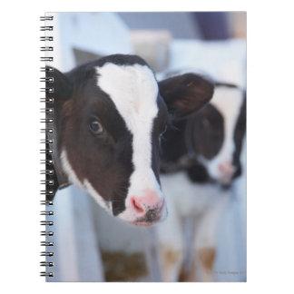Portrait of cow spiral notebook
