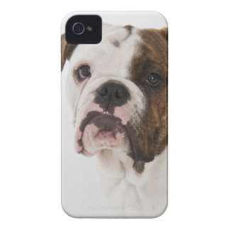 Portrait of cute Bulldog pup iPhone 4 Cover
