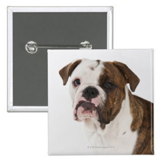 Portrait of cute Bulldog pup Pinback Button