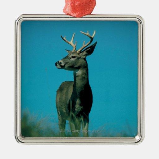 Portrait of deer christmas ornaments
