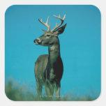 Portrait of deer square sticker