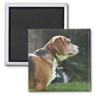 Portrait of Dog 2 Inch Square Magnet