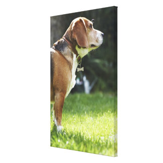 Portrait of Dog 3 Canvas Print
