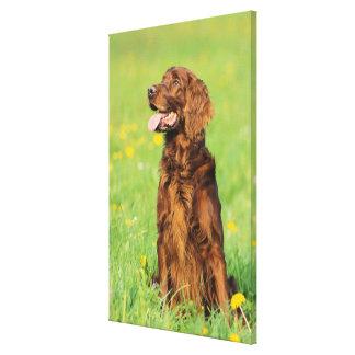 Portrait of Dog 4 Canvas Print