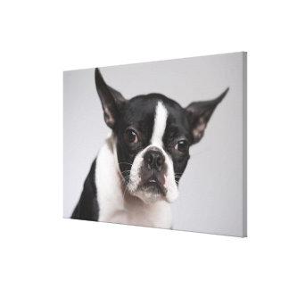 Portrait of dog canvas print