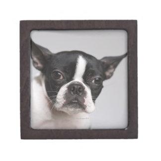 Portrait of dog gift box
