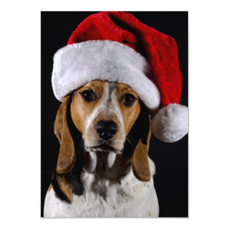 Portrait of dog hound wearing Christmas hat Card
