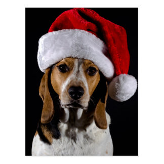 Portrait of dog hound wearing Christmas hat Postcard