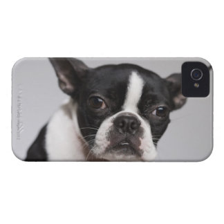 Portrait of dog iPhone 4 cover