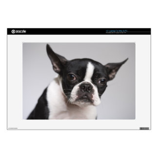 Portrait of dog laptop decals